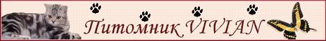 Питомник VIVIAN - продажа британских котят